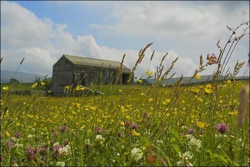 thisle field